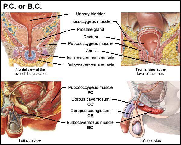 如何彻底治疗男性生殖器疱疹 图解:男性生殖器按摩技巧 男性生殖器小