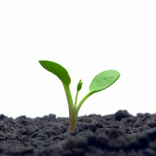 豆子发芽的简笔画内容图片展示_豆子发芽的简笔画  小树苗发芽过程的