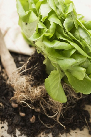 发涩的食物能预防高血脂?