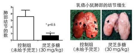 灵芝多糖对乳癌小鼠肿瘤生长的抑制作用(3)-灵芝多糖抑制乳癌肿
