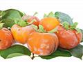 柿霜具有哪些功效?