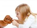 怎么预防狂犬病?