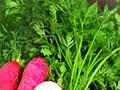 為什么不吃芹菜葉子?