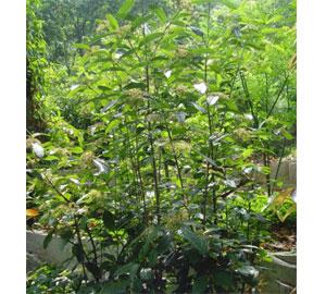 壁纸 成片种植 风景 植物 种植基地 桌面 300_270