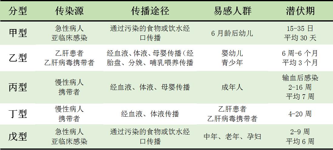 慢性乙型病毒性肝炎_病毒性肝炎有哪几种分型?