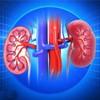 肾炎的危害有哪些 盘点肾炎的7大危害